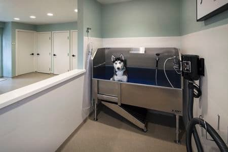 Interior view of pet wash area at Westwood Apartment Homes in San Diego, CA.