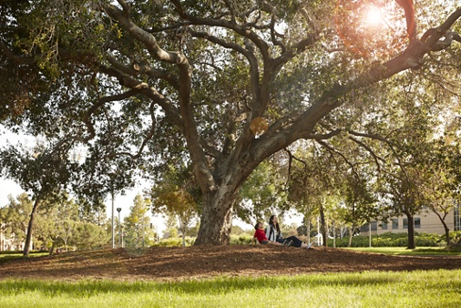 Exterior view of people under a tree at Bill Barber Park in Irvine, CA.