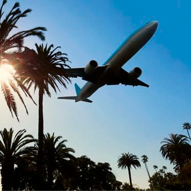 A jet flying over palm trees with the sunlight coming thru one of the trees.